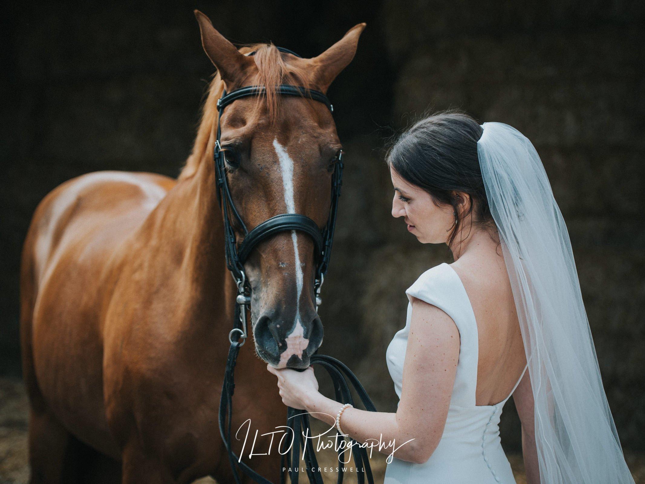 Wedding Portfolio, bride and a horse.