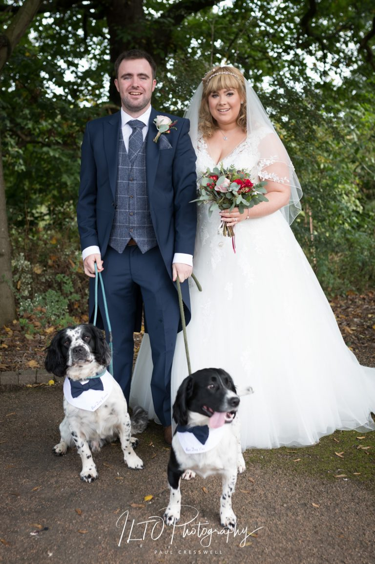 Dogs at wedding with bride and groom